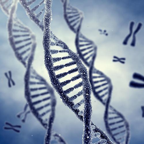 Oddelenie Genetiky