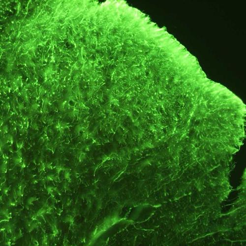 Oddelenie-regeneracnej-mediciny-a-bunkovej-terapie