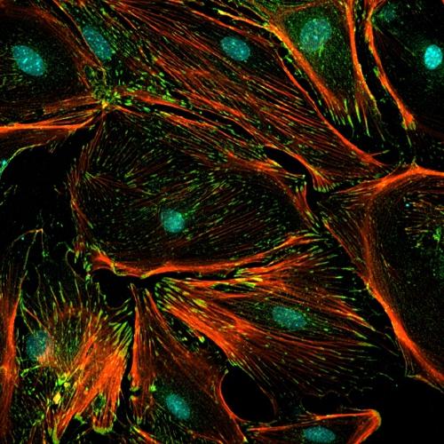 oddelenie-nanobiologie